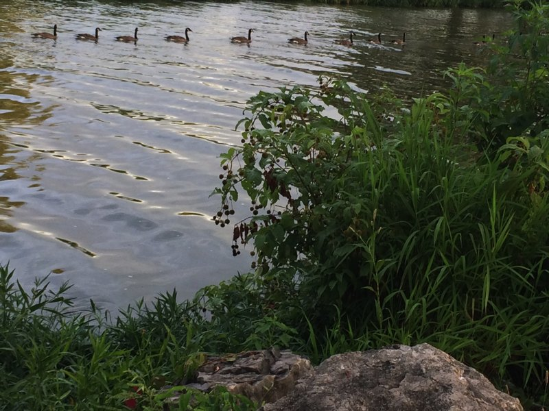 Even the geese were heading back to shelter!