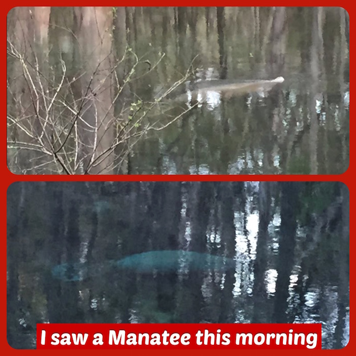 Manatee Photo (WEB)