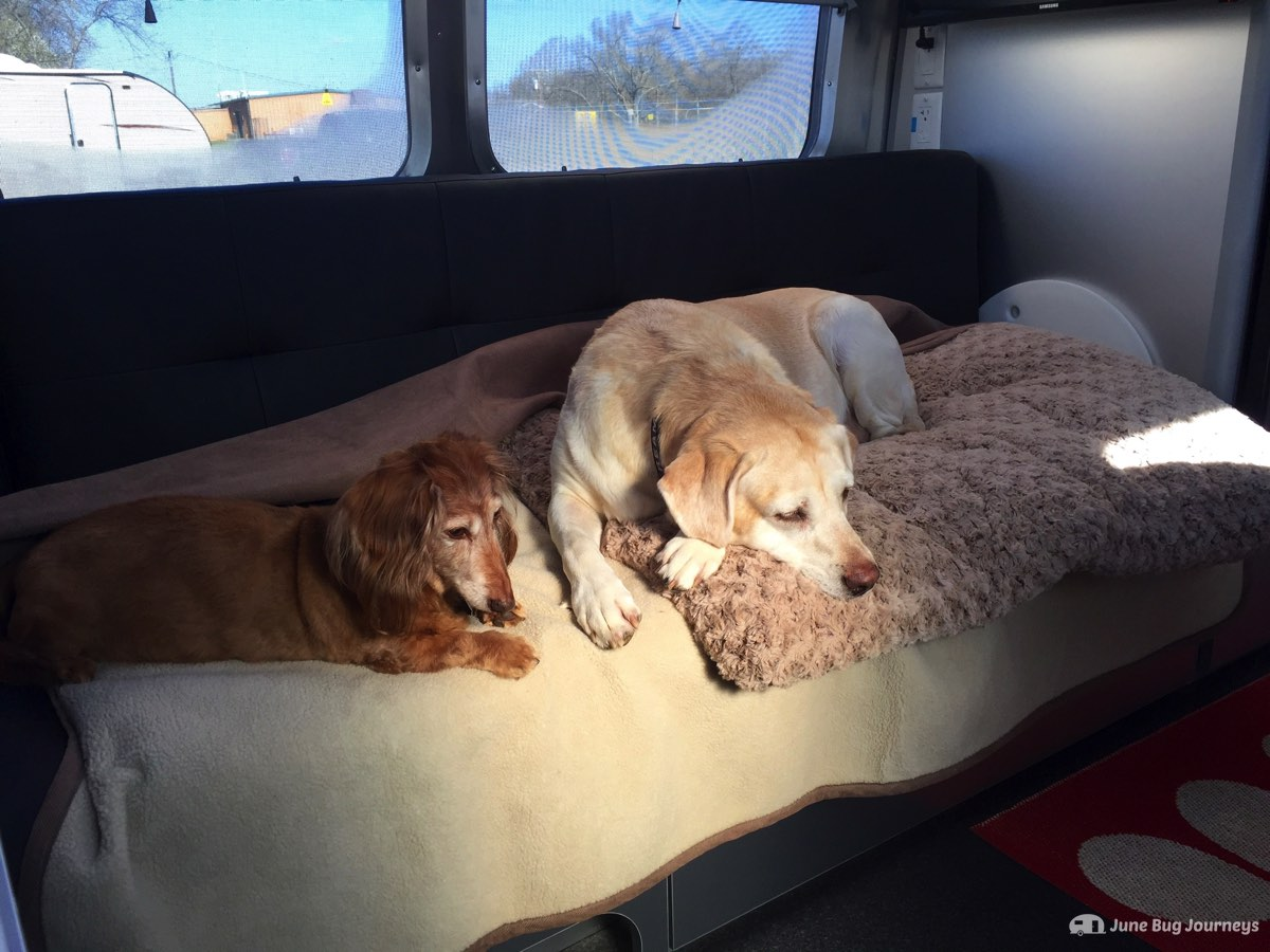 Opie and Vera are not looking forward to climbing back in the truck. They would prefer to stay snug on their blankets in the Airstream